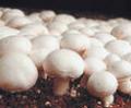 Почва для грибов