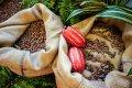 Cocoa beans, Ecuador ASS