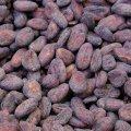 Cocoa beans, Madagascar, Sambirano No. 1
