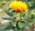Сафлор красильный урожая 2015 года