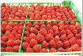 Замороженная и асептическая ягода