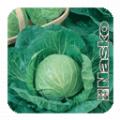 Семена капусты белокочанной