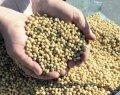 Соя семена. Насіння сої РАУНДАП -R Лідери селекції під гліфосат