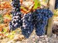 Натуральное сухое красное вино - Кабарне Фран