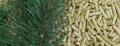 Pellet di legna