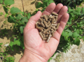 Древесные пеллеты, pellets, spruce pellets, wood pellets A2 En plus