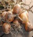 Семена лука Булат озимого репчатого Lucky Seed 10000семян