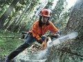 Спил деревьев любой сложности с автовышкой в Кривом Роге и по Украине