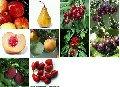 Плоды и фрукты мороженые