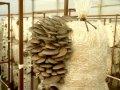 Мешки для грибных блоков