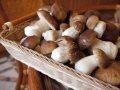 Белый гриб (закупка)