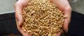 Пшеница озимая 2 класс