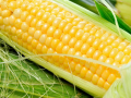 Кукуруза, зерно