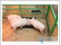 Оборудование для свиноводства, перегородки для свиней от производителя в Днепропетровске, щелевые полы для свиноферм