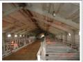 Производство и продажа оборудования для свиноферм, свинокомплексов, оборудования для свиноводства, щелевые полы, перегородки, станки для осеменения от производителя в Днепропетровске