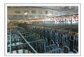 Построение и реконструкция свиноводческих комплексов, изготовление по индивидуальному чертежу оборудования для свиноферм, вентиляционные системы для свинарников, станки и кормушки для свиней