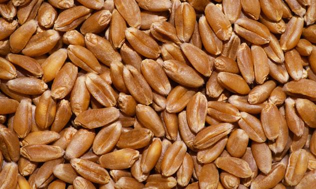 У курских аграриев есть реальная возможность получить 4 млн. тонн зерна