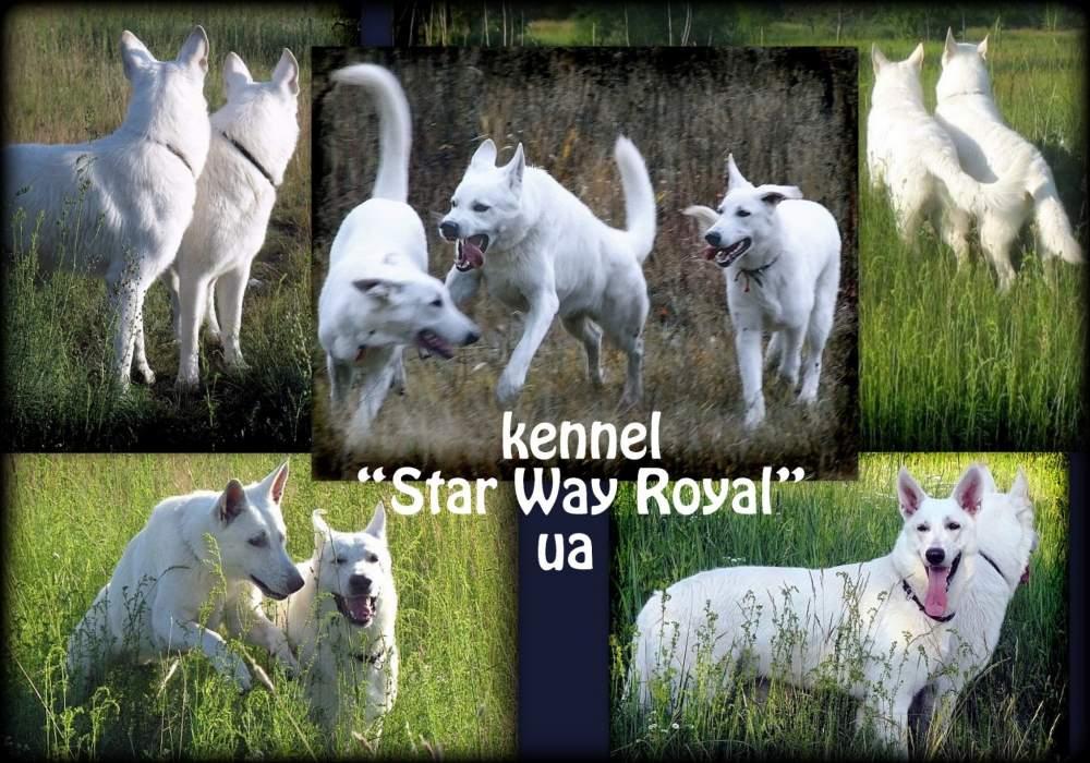 Стар Вей Роял, ЧП (Star Way Royal - питомник)