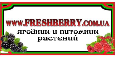 Freshberry, Internet-magazin