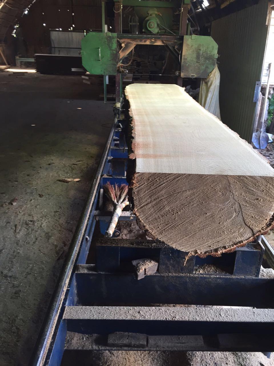 Timbers, ChP