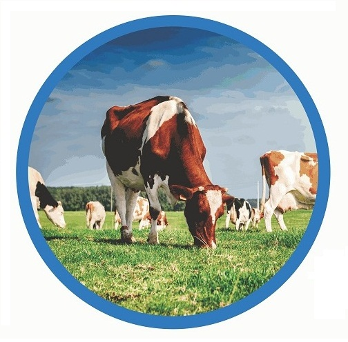 DairyCo Ucrania