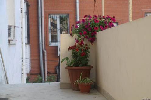 Hostel Fikus, ООО