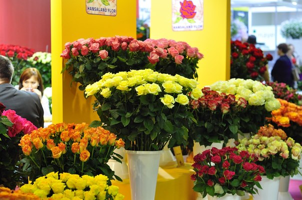 Выращивание роз, ЧП, Бортничи