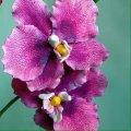 Империя Орхидей