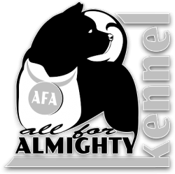 American Akita ALL FOR ALMIGHTY kennel (PITOMNIK)
