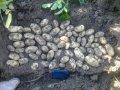 Zabarovskoe (elithoz kartofelnyh semyan), OOO, Chernigov