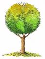 Саженцы деревьев лиственных пород купить оптом и в розницу в Украине на Allbiz