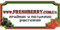 Freshberry, Интернет-магазин