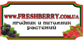 Freshberry, Internet-magazin