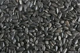 Заказать Закупаем зерновые и масличные кулбтуры по Днепропетровской области