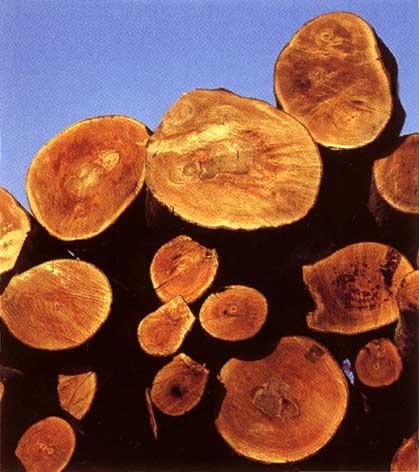 Заказать Первичная обработка древесины