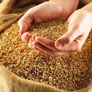 Order Certification of production (grain and olive) for the Customer