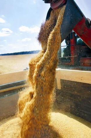 Order Shipment of grain with ZhD of elevators in Ukraine