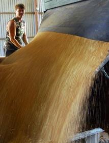 Order Transportation of grain crops by railway transport in Ukraine