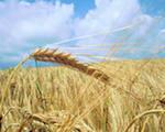 Заказать Услуги по уборке зерновых