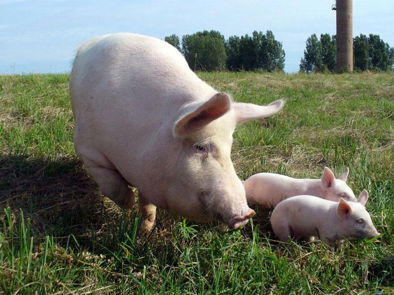 Заказать Изготовление комбикормов для животных