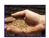 Заказать Закупка семян