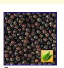 Заказать Продажа на экспорт-семена рапса, семена горчицы, семена кориандра, подсолнечник кондитерский