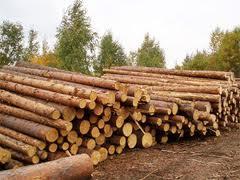 Заказать Экспорт леса
