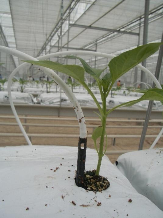 Технологическое сопровождение проектов по выращиванию овощей