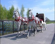 Заказать Катание на санях и карете, запряжённых лошадью
