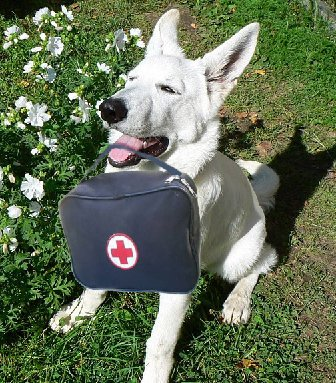 Канистерапия (лечение при помощи собак)