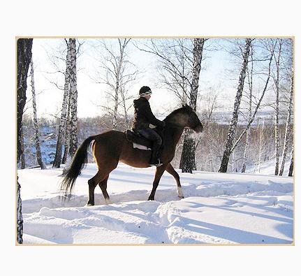 Заказать Гостиница Киев-S, Жашков, конные прогулки, экскурсия, на конный завод, езда на лошадях, конях, инструктор,
