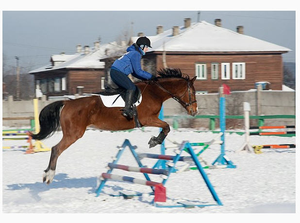 Заказать Гостиница Киев-S, Жашков, конно-спортивный клуб, ипподром, экскурсия