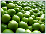 Заказать Горох семена канадский гибрид LOGAN LS-18(Логан ЛС-18), экспорт