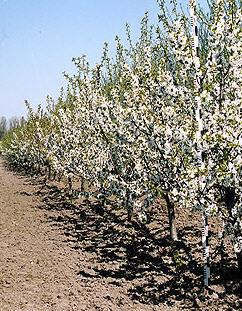 Заказать Технологии выращивания плодовых культур